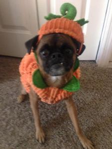 In a pumpkin, would rather eat a pumpkin.